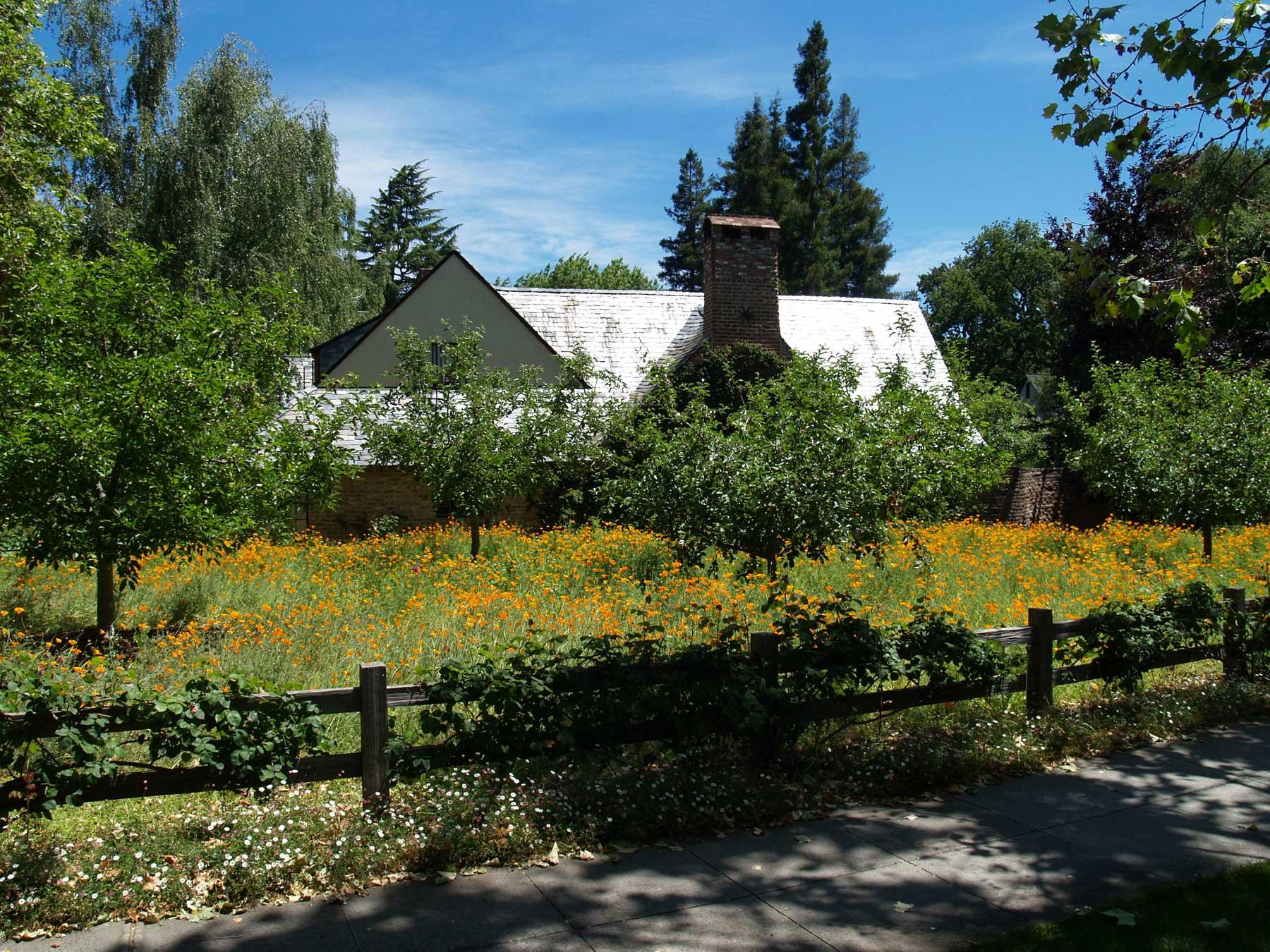 Исторический коттедж Джобса был снесен рядом с полем абрикосовых деревьев